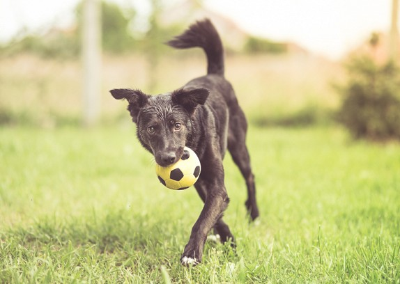 Choosing the Right Mixed Breed or Hybrid Dog